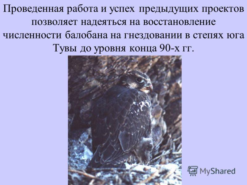 Проведенная работа и успех предыдущих проектов позволяет надеяться на восстановление численности балобана на гнездовании в степях юга Тувы до уровня конца 90-х гг.