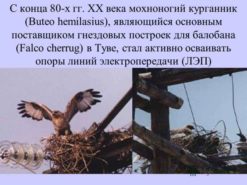 С конца 80-х гг. XX века мохноногий курганник (Buteo hemilasius), являющийся основным поставщиком гнездовых построек для балобана (Falco cherrug) в Туве, стал активно осваивать опоры линий электропередачи (ЛЭП)