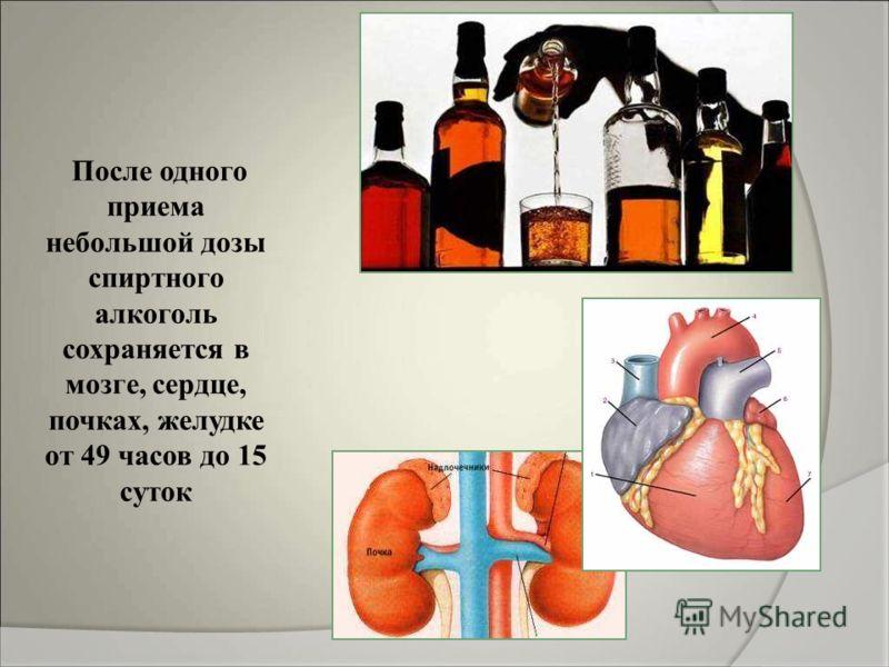 После одного приема небольшой дозы спиртного алкоголь сохраняется в мозге, сердце, почках, желудке от 49 часов до 15 суток