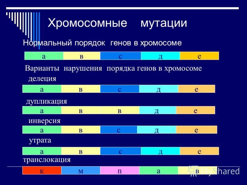 Хромосомные мутации Нормальный порядок генов в хромосоме авсде ва всде ва ед ева е сд к а вanм в сд Варианты нарушения порядка генов в хромосоме делеция дупликация инверсия транслокация утрата