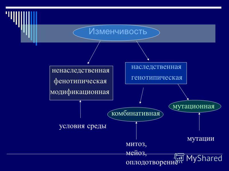 Изменчивость модификационная наследственная ненаследственная фенотипическая генотипическая условия среды комбинативная мутационная митоз, мейоз, оплодотворение мутации