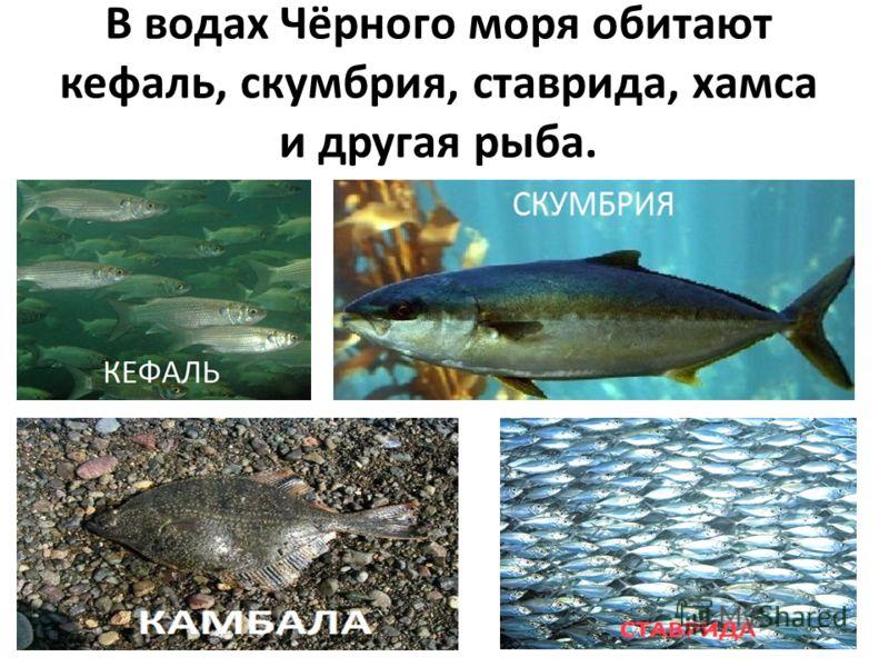 Верхний слой моря насыщен кислородом, здесь разнообразен животный мир.