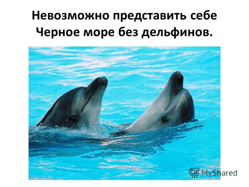 В водах Чёрного моря обитают кефаль, скумбрия, ставрида, хамса и другая рыба.