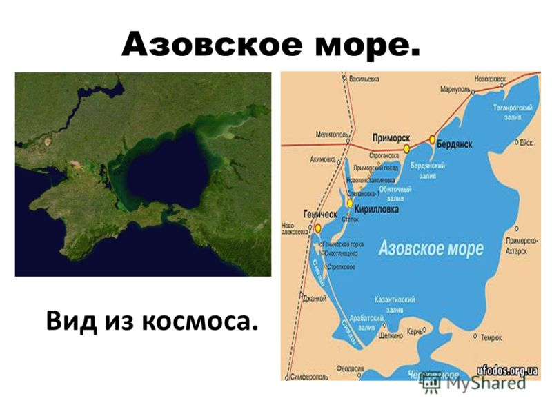 Невозможно представить себе Черное море без дельфинов.