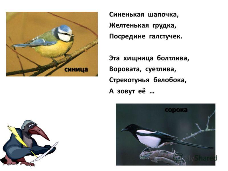 Птичья карусель Эту птичку легко узнать по голосу. За свою песенку её называют «лесной кошкой». Серенькая птаха прекрасно ползает по деревьям не только вверх, но и вниз головою. Узнайте по описанию иволга поползень