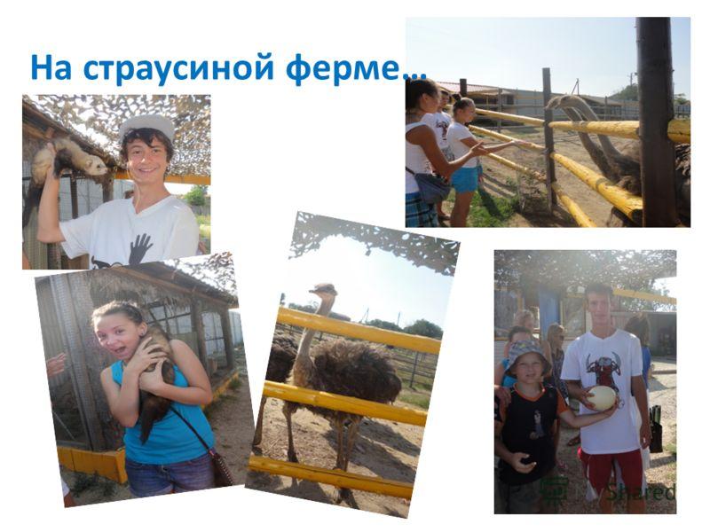 На страусиной ферме…