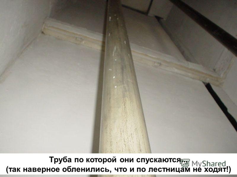 Труба по которой они спускаются... (так наверное обленились, что и по лестницам не ходят!)