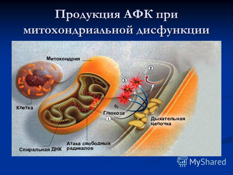 Продукция АФК при митохондриальной дисфункции
