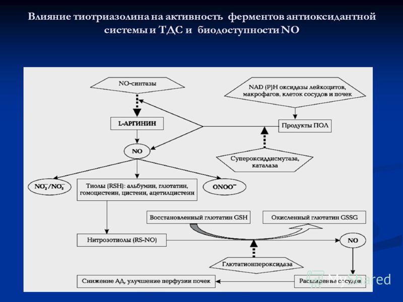 Влияние тиотриазолина на активность ферментов антиоксидантной системы и ТДС и биодоступности NO