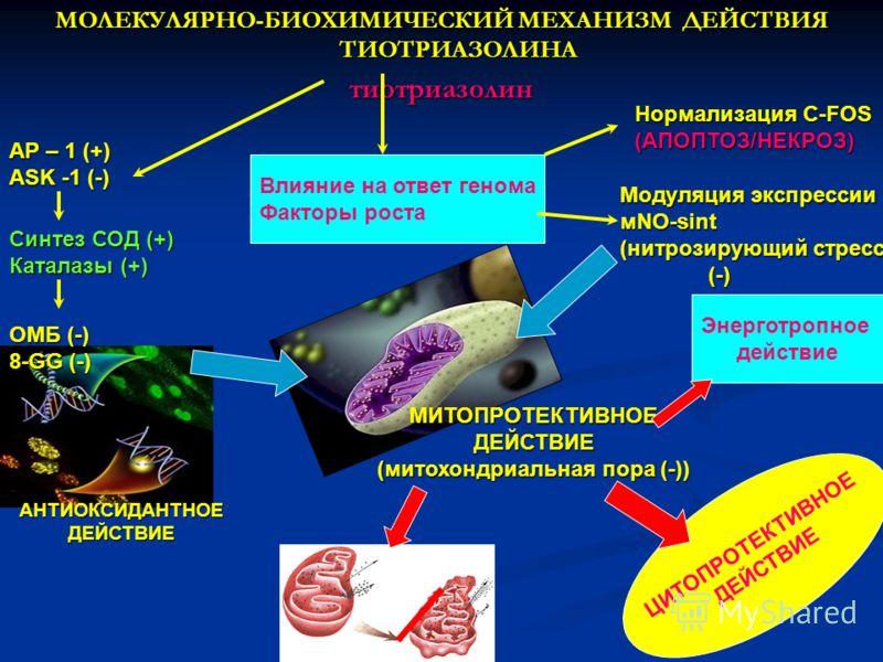 МОЛЕКУЛЯРНО-БИОХИМИЧЕСКИЙ МЕХАНИЗМ ДЕЙСТВИЯ ТИОТРИАЗОЛИНА тиотриазолин AP – 1 (+) ASK -1 (-) Синтез СОД (+) Каталазы (+) ОМБ (-) 8-GG (-) Влияние на ответ генома Факторы роста Нормализация C-FOS (АПОПТОЗ/НЕКРОЗ) Модуляция экспрессии мNO-sint (нитрози
