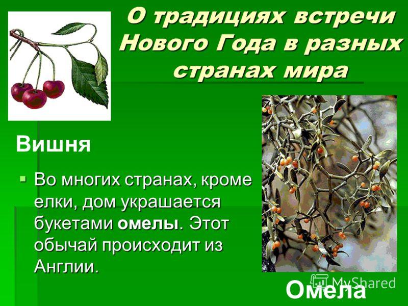 О традициях встречи Нового Года в разных странах мира Во многих странах, кроме елки, дом украшается букетами омелы. Этот обычай происходит из Англии. Во многих странах, кроме елки, дом украшается букетами омелы. Этот обычай происходит из Англии. Вишн