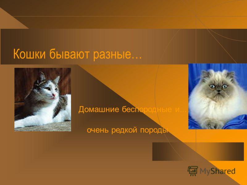 Кошки бывают разные… Дикие они бывают и... и…домашние