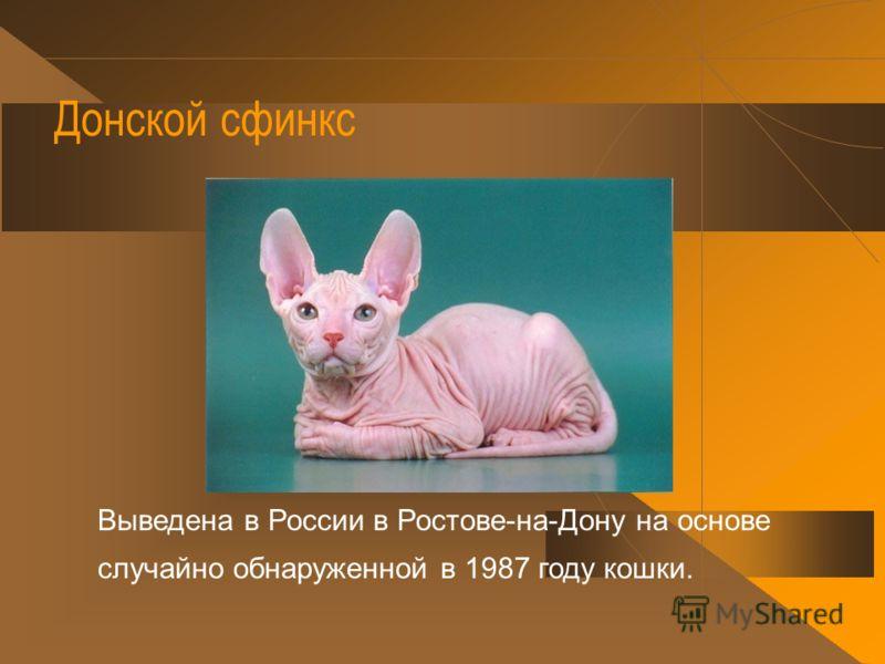 Бирманская кошка По преданию, была привезена из Бирмы от буддийских монахов и оказалась в 1919 году во Франции, где и выводится до сих пор. Разводят также и в других странах, в том числе и в России.