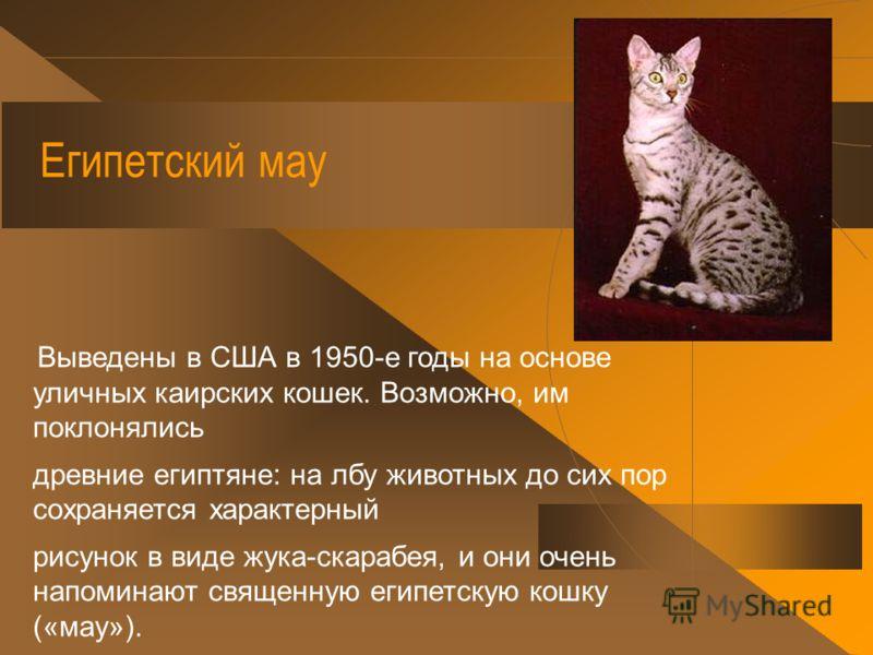 Донской сфинкс Выведена в России в Ростове-на-Дону на основе случайно обнаруженной в 1987 году кошки.