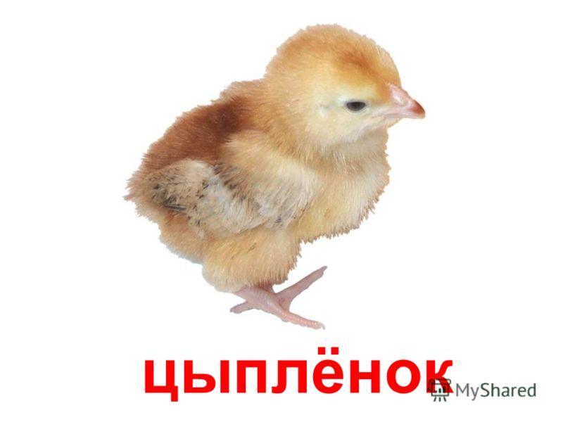 домашние животные papa-vlad.narod.ru
