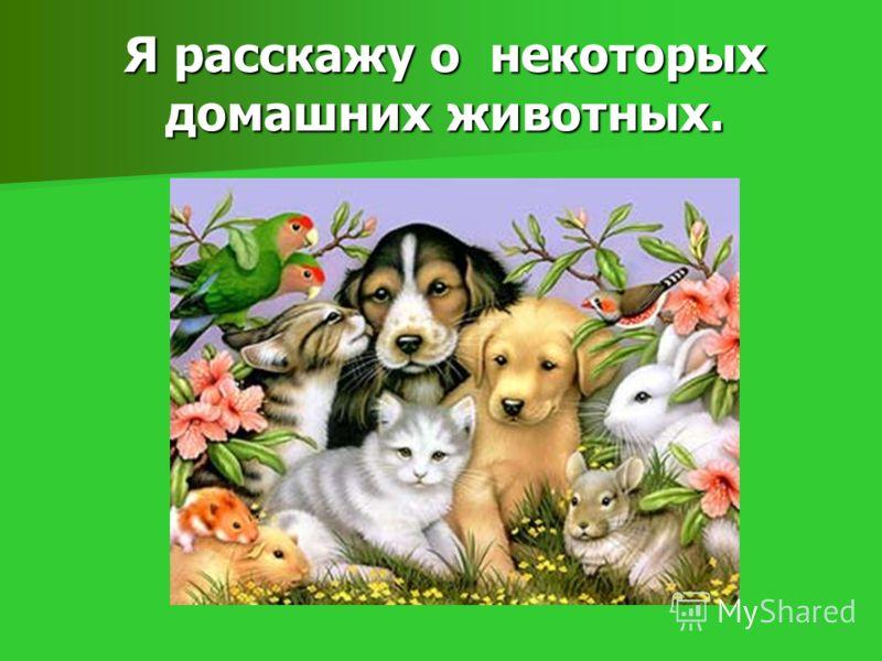 Я расскажу о некоторых домашних животных.