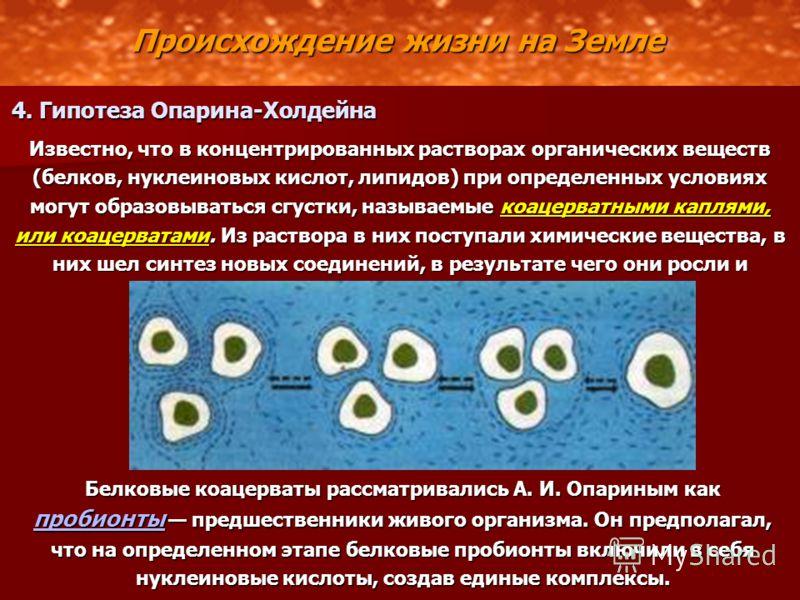 Происхождение жизни на Земле 4. Гипотеза Опарина-Холдейна Известно, что в концентрированных растворах органических веществ (белков, нуклеиновых кислот, липидов) при определенных условиях могут образовываться сгустки, называемые коацерватными каплями,