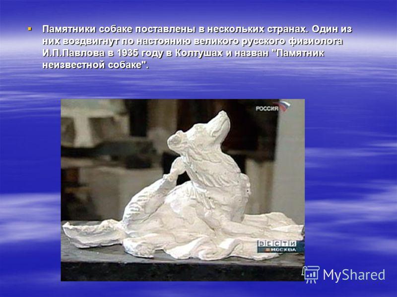 Памятники собаке. Наибольшую известность в России и в мире приобрел