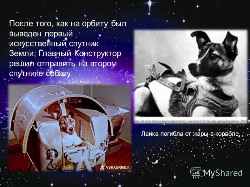 После того, как на орбиту был выведен первый искусственный спутник Земли, Главный Конструктор решил отправить на втором спутнике собаку. Лайка погибла от жары в корабле.