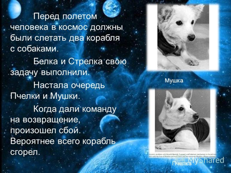 Перед полетом человека в космос должны были слетать два корабля с собаками. Белка и Стрелка свою задачу выполнили. Настала очередь Пчелки и Мушки. Когда дали команду на возвращение, произошел сбой. Вероятнее всего корабль сгорел. Мушка Пчелка