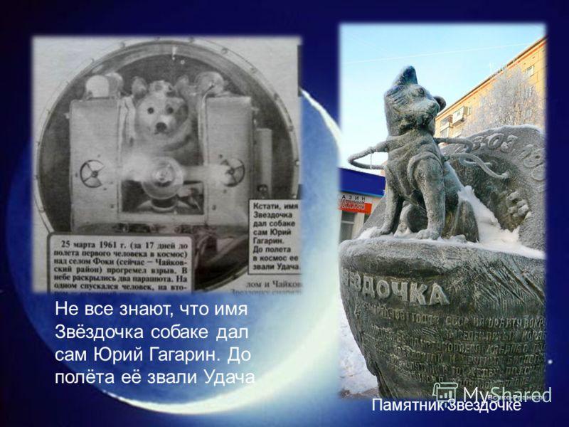 Памятник Звездочке Не все знают, что имя Звёздочка собаке дал сам Юрий Гагарин. До полёта её звали Удача