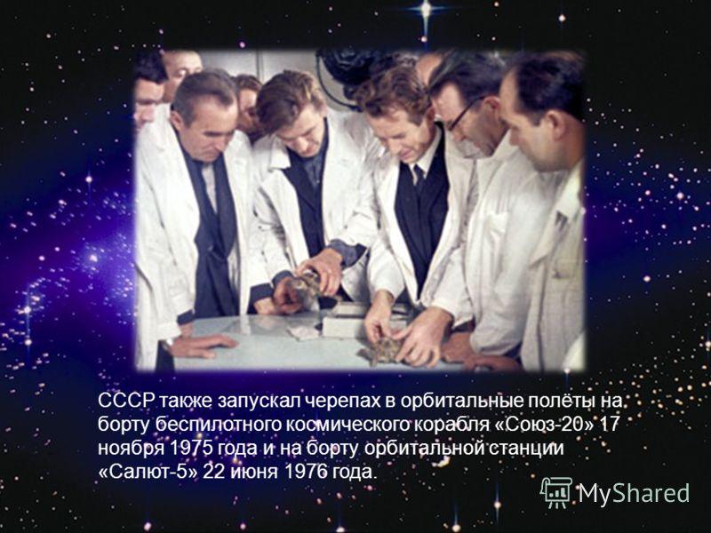 СССР также запускал черепах в орбитальные полёты на борту беспилотного космического корабля «Союз-20» 17 ноября 1975 года и на борту орбитальной станции «Салют-5» 22 июня 1976 года.