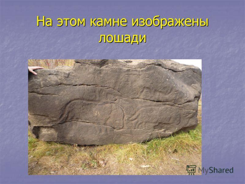 На этом камне изображены лошади