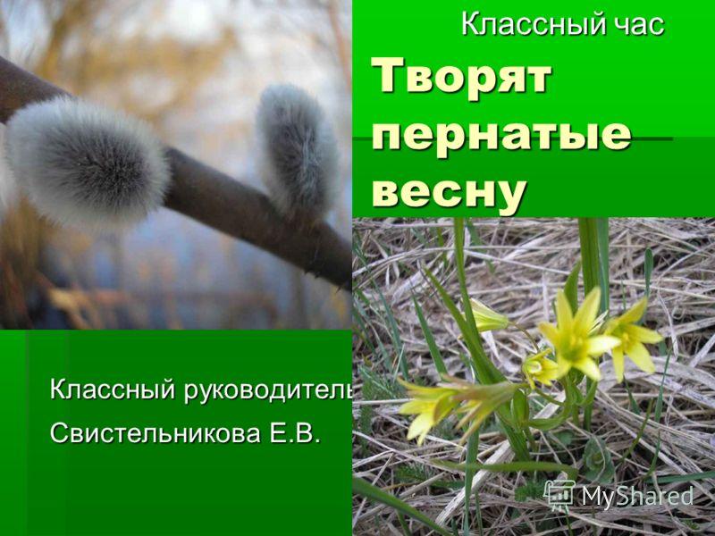 Творят пернатые весну Классный час Классный час Классный руководитель Свистельникова Е.В.