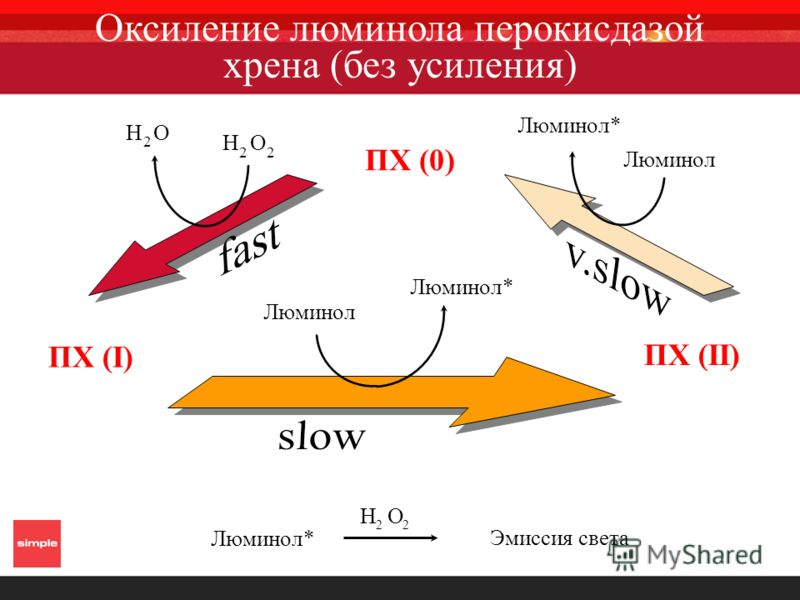 H O 2 H O 2 ПХ (I) ПХ (0) Люминол* Люминол ПХ (II) Люминол* Эмиссия света Люминол* Люминол H O 2 Оксиление люминола перокисдазой хрена (без усиления)