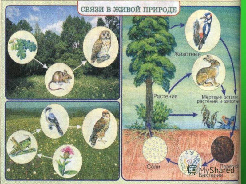 Пример связи живой и неживой природы и схема