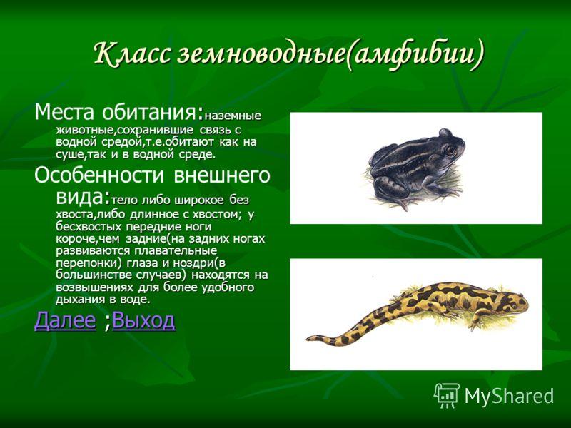Класс земноводные(амфибии) : наземные животные,сохранившие связь с водной средой,т.е.обитают как на суше,так и в водной среде. Места обитания: наземные животные,сохранившие связь с водной средой,т.е.обитают как на суше,так и в водной среде. : тело ли