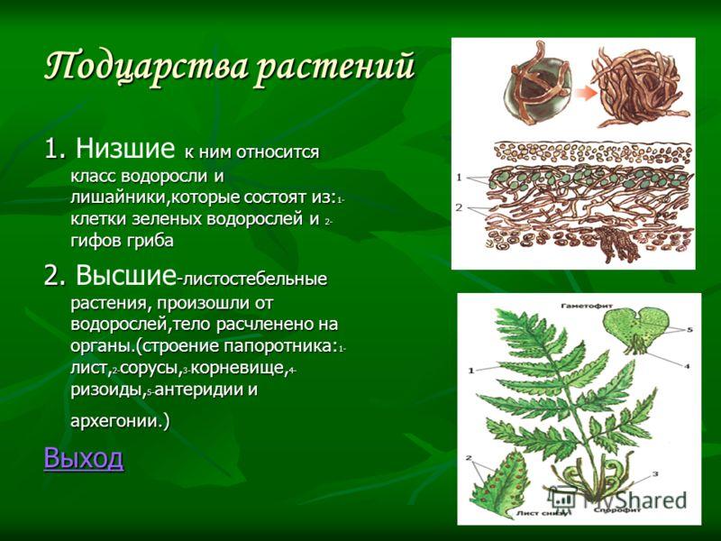Подцарства растений 1. к ним относится класс водоросли и лишайники,которые состоят из: 1- клетки зеленых водорослей и 2- гифов гриба 1. Низшие к ним относится класс водоросли и лишайники,которые состоят из: 1- клетки зеленых водорослей и 2- гифов гри