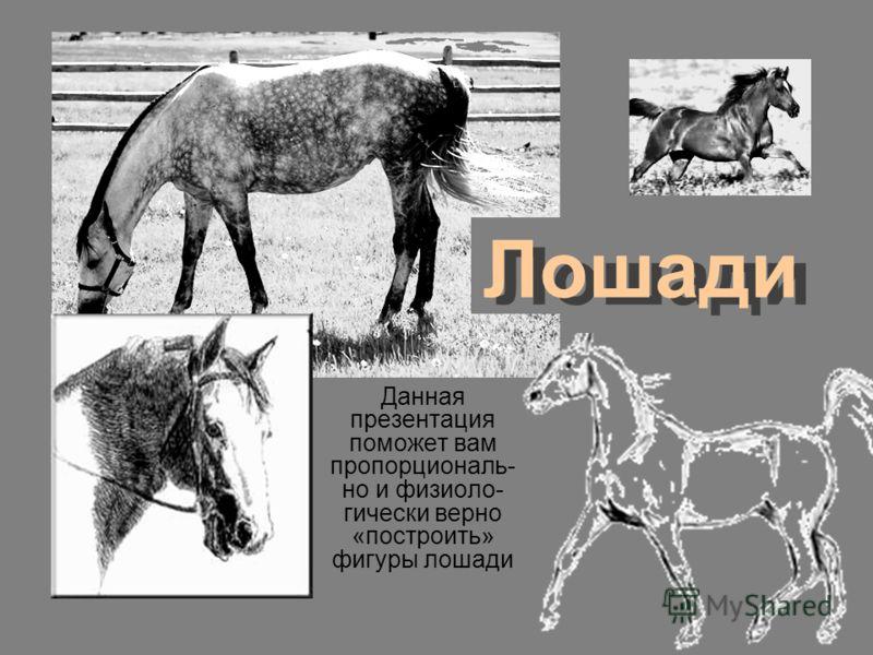 Лошади Данная презентация поможет вам пропорциональ- но и физиоло- гически верно «построить» фигуры лошади
