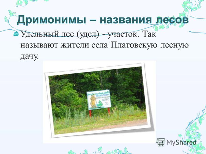 Удельный лес ( удел ) - участок. Так называют жители села Платовскую лесную дачу.