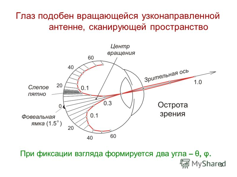 9 Глаз подобен вращающейся узконаправленной антенне, сканирующей пространство При фиксации взгляда формируется два угла – θ, φ.