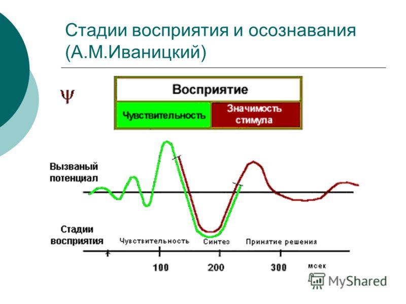 Стадии восприятия и осознавания (А.М.Иваницкий)