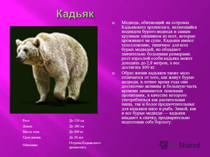 Рост До 150 см Длина До 280 см Масса телаДо 800 кг Срок жизниДо 20 лет Обитание Острова Кадьякского архипелага Медведь, обитающий на островах Кадьякского архипелага, являющийся подвидом бурого медведя и самым крупным хищником из всех, которые прожива