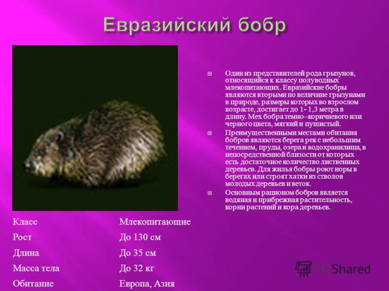 Один из представителей рода грызунов, относящийся к классу полуводных млекопитающих. Евразийские бобры являются вторыми по величине грызунами в природе, размеры которых во взрослом возрасте, достигает до 1- 1,3 метра в длину. Мех бобра темно – коричн