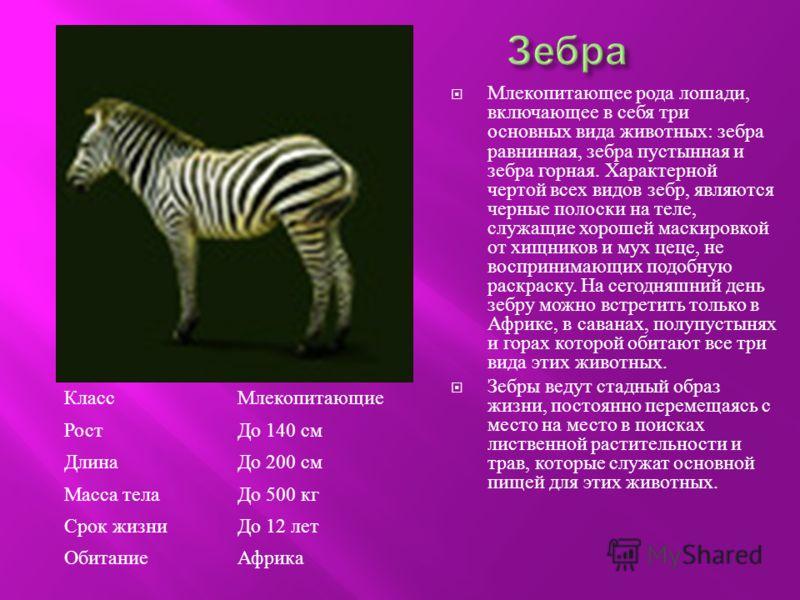 Млекопитающее рода лошади, включающее в себя три основных вида животных : зебра равнинная, зебра пустынная и зебра горная. Характерной чертой всех видов зебр, являются черные полоски на теле, служащие хорошей маскировкой от хищников и мух цеце, не во