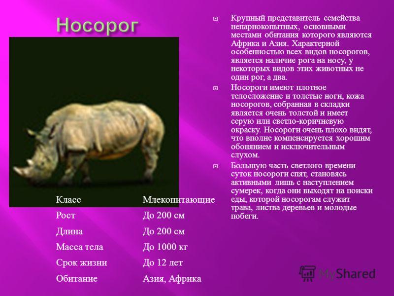 Крупный представитель семейства непарнокопытных, основными местами обитания которого являются Африка и Азия. Характерной особенностью всех видов носорогов, является наличие рога на носу, у некоторых видов этих животных не один рог, а два. Носороги им