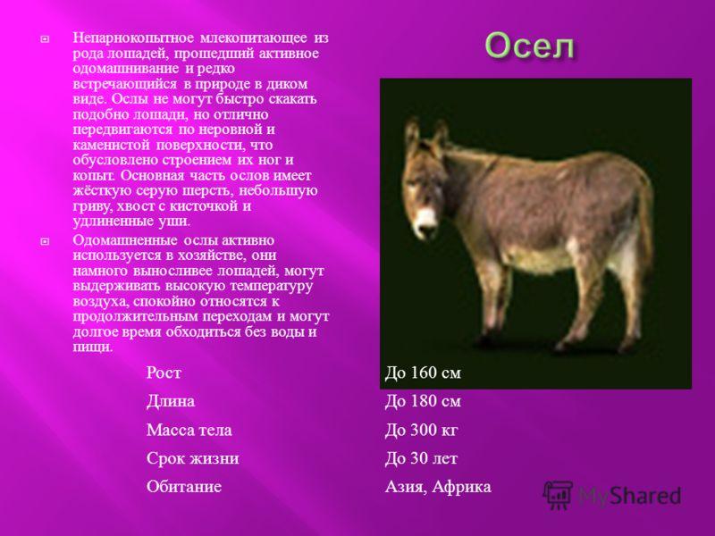 Непарнокопытное млекопитающее из рода лошадей, прошедший активное одомашнивание и редко встречающийся в природе в диком виде. Ослы не могут быстро скакать подобно лошади, но отлично передвигаются по неровной и каменистой поверхности, что обусловлено