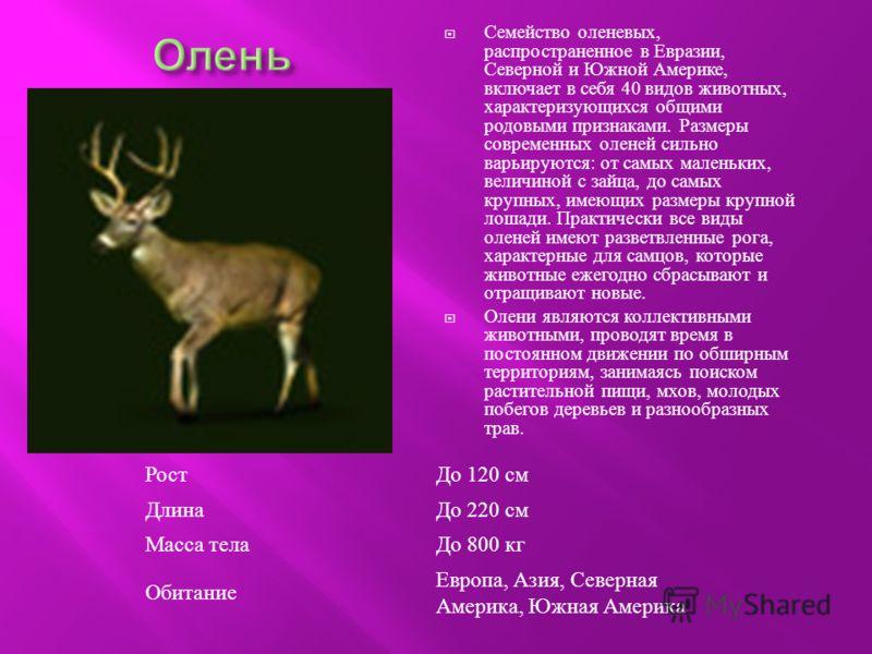 Семейство оленевых, распространенное в Евразии, Северной и Южной Америке, включает в себя 40 видов животных, характеризующихся общими родовыми признаками. Размеры современных оленей сильно варьируются : от самых маленьких, величиной с зайца, до самых