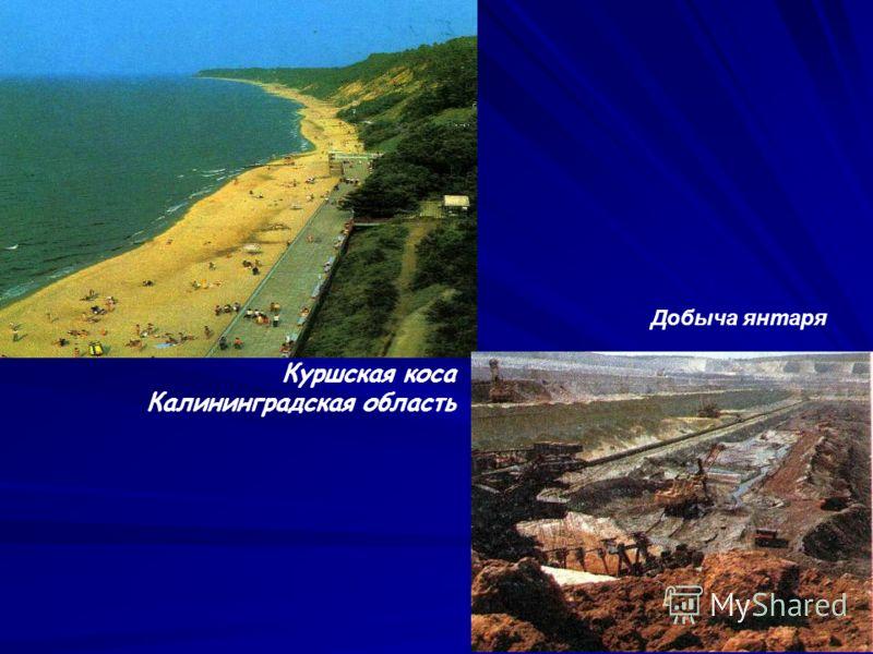 8 Куршская коса Калининградская область Добыча янтаря