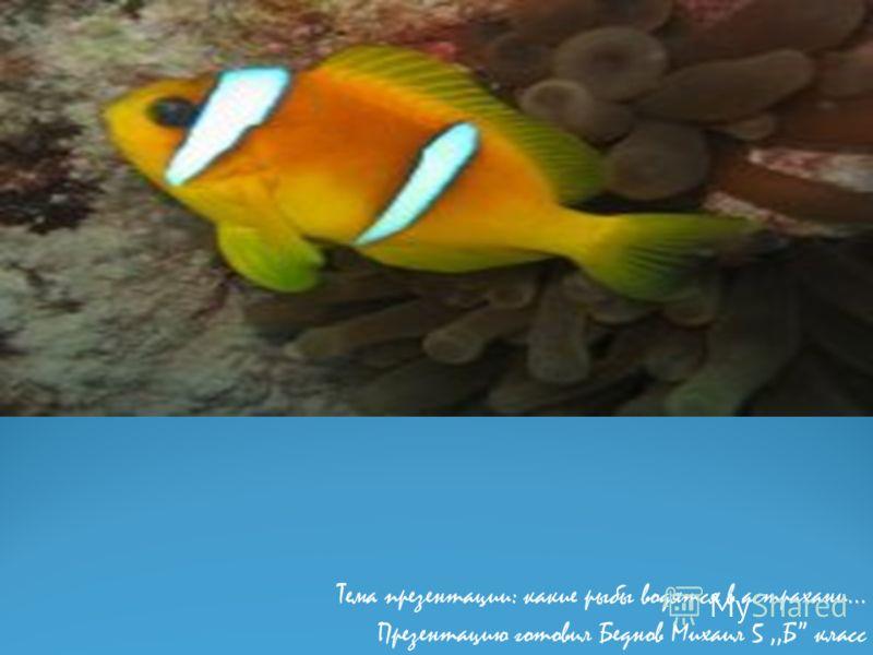 Тема презентации: какие рыбы водятся в астрахани… Презентацию готовил Беднов Михаил 5,,Б класс