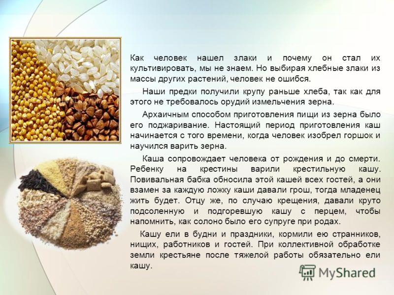 Как человек нашел злаки и почему он стал их культивировать, мы не знаем. Но выбирая хлебные злаки из массы других растений, человек не ошибся. Наши предки получили крупу раньше хлеба, так как для этого не требовалось орудий измельчения зерна. Архаичн