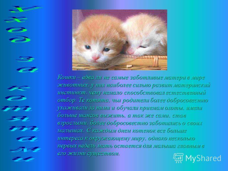 Кошку можно держать в помещении и не выпускать на улицу, но надо обязательно помнить о том, что это животное любит простор, движение. Сейчас держат кошек в клетках, но и в этом случае животное надо выпускать из клетки и давать свободно двигаться по к