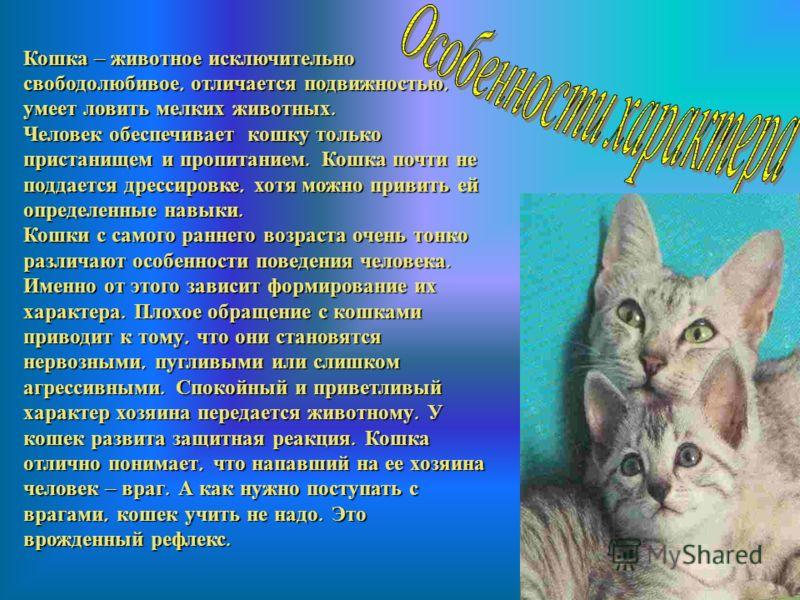 Домашняя кошка становится объектом внимания человека во второй половине XIX и особенно в начале XX века. Домашняя кошка становится объектом внимания человека во второй половине XIX и особенно в начале XX века. Помощницей в получении новых пород иногд