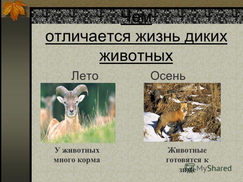 Чем отличается жизнь диких животных Лето У животных много корма Животные готовятся к зиме Осень