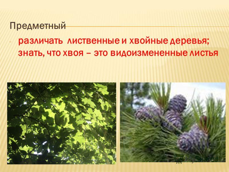 Предметный - различать лиственные и хвойные деревья; знать, что хвоя – это видоизмененные листья