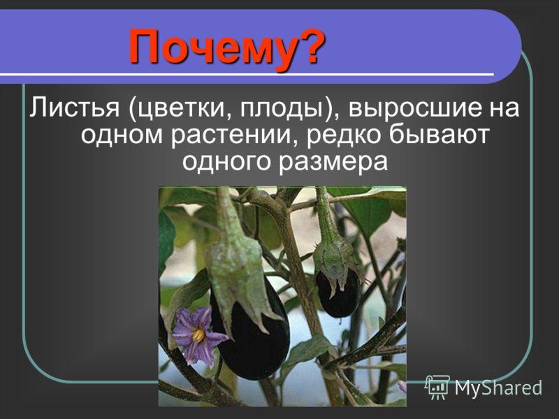 Листья (цветки, плоды), выросшие на одном растении, редко бывают одного размера Почему?